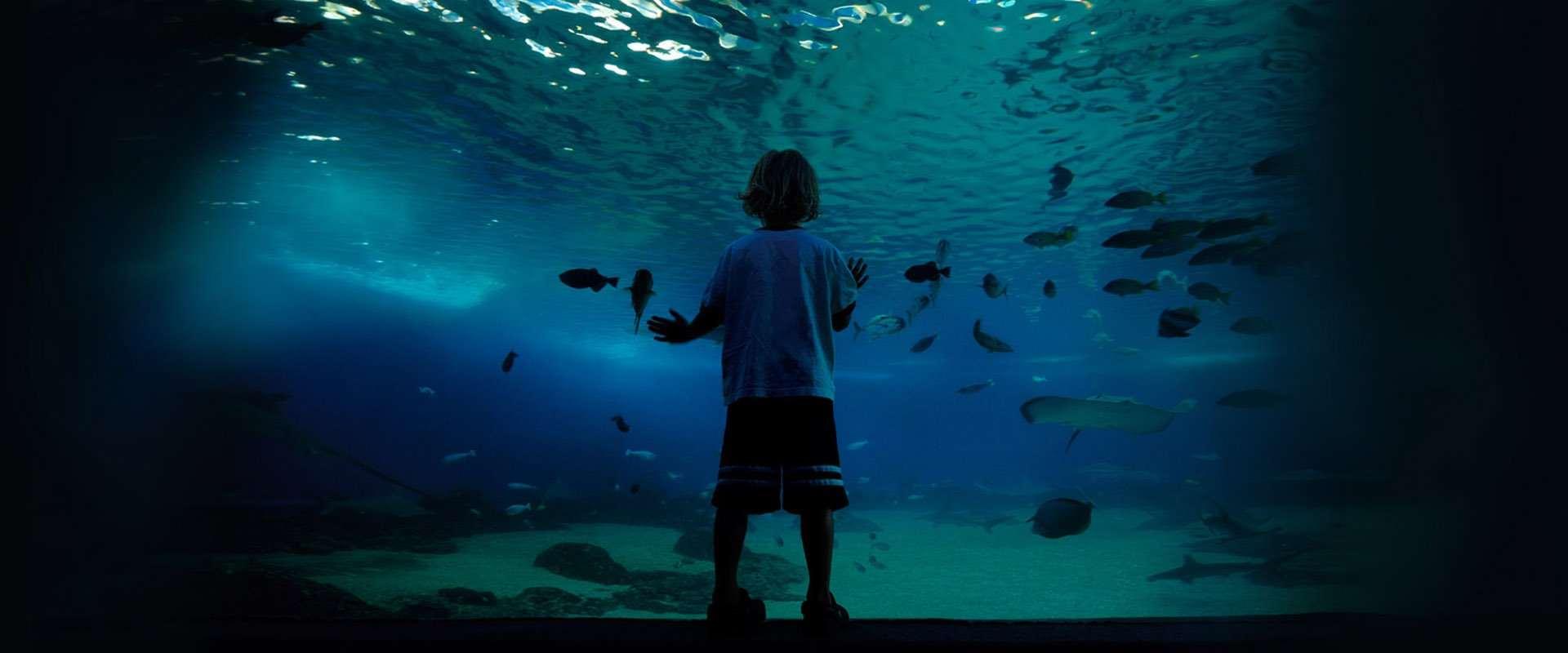 Aquarium Window Installation & Waterproofing