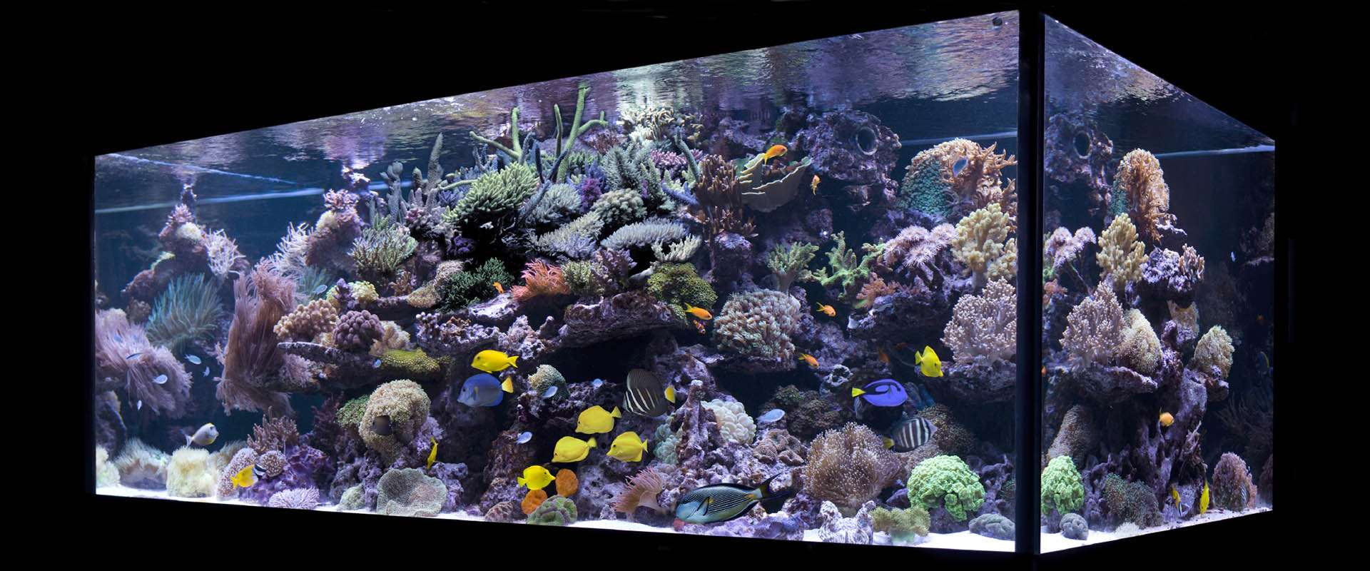 Aqualife manufactures residential glass aquariums or acrylic aquariums