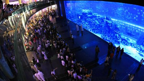 Aqualife provided acrylic panel polishing at the Dubai Mall Aquarium