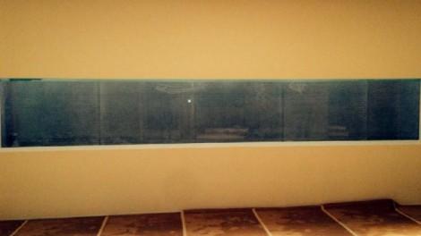 Private Residence Aquarium Lookdowns - Private Residence Aquarium Lookdowns
