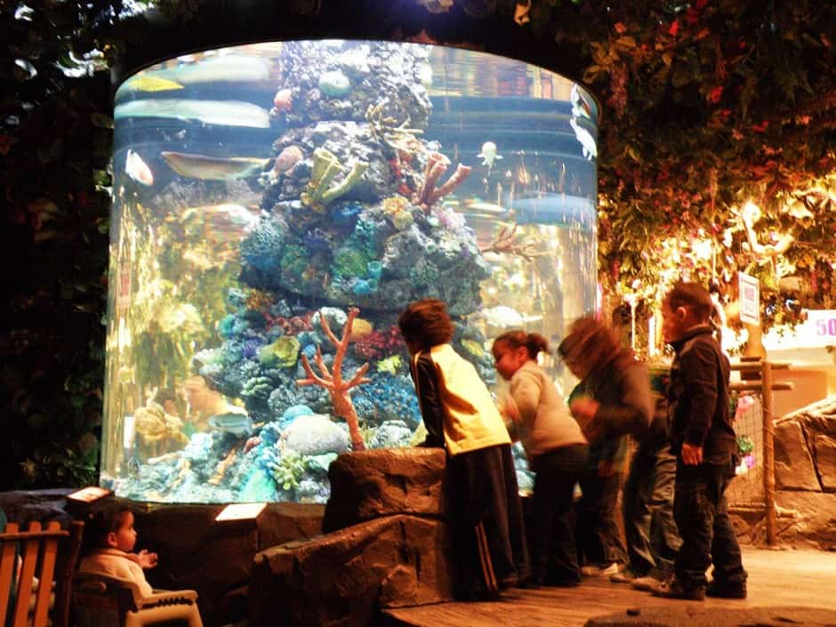 Rainforest Cafe Aquariums