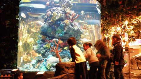 Rainforest Cafe Aquariums - Rainforest Cafe Aquariums