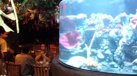 Rainforest Cafe Aquarium - Rainforest Cafe Aquarium