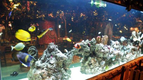 Rainforest-Cafe-Aquariums - Rainforest-Cafe-Aquariums
