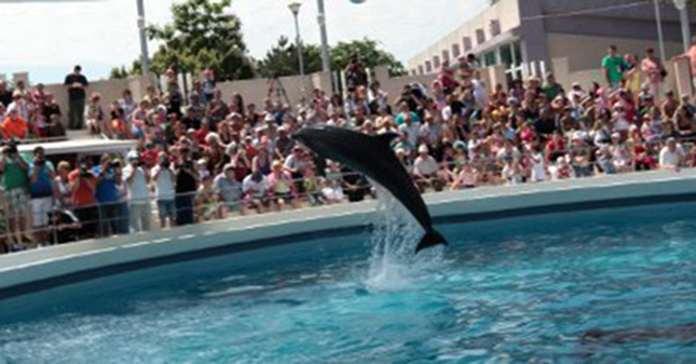 Constanta Dolphinarium, Aquarium
