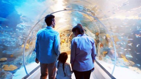 Acrylic Tunnel in EMAAR Aquarium - Acrylic Tunnel in EMAAR Aquarium