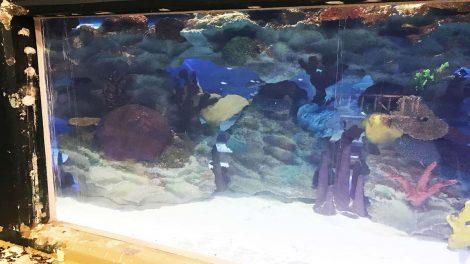 Acrylic Panels in EMAAR Aquarium - Acrylic Panels in EMAAR Aquarium