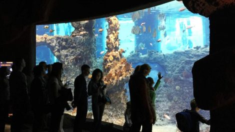 Wroclaw Aquarium Africarium - Wroclaw Aquarium Africarium