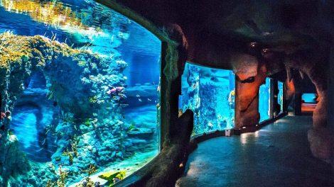 Wroclaw Zoo Aquarium Africarium